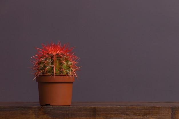 Cactus aux épines rouges dans un pot brun se dresse sur une table en bois