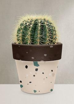 Cactus baril d'or dans un pot en terrazzo