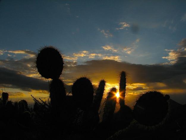 Des cactus et un beau coucher de soleil