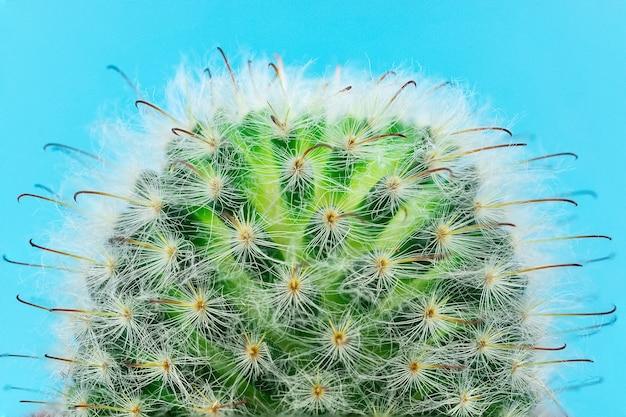 Cactus sur un bleu