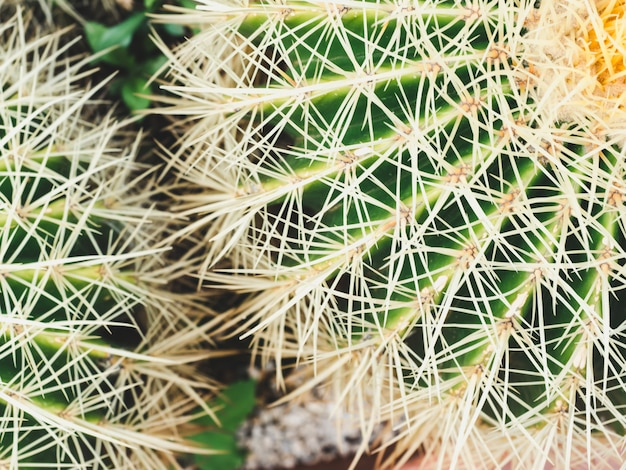 Cactus brillant et piquant. vue de dessus. fond tropical