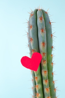 Cactus et coeur rouge dessus, concept de sentiments contradictoires, amour cruel, coeur inaccessible. le minimalisme, l'ultime
