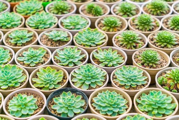 Cactus coloré paysage sec symétrie