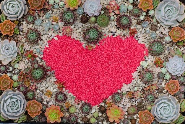 Cactus, croissant, pierre, fond