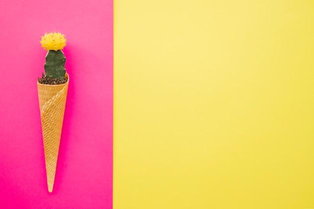 Cactus dans le cône de gaufre