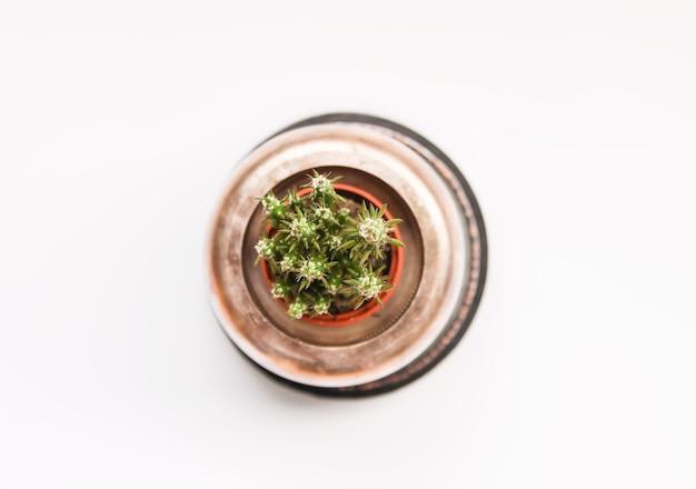 Cactus dans le pot de cuivre. plante décorative dans un intérieur de chambre moderne et minimaliste.