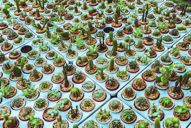 Cactus dans les stations agricoles