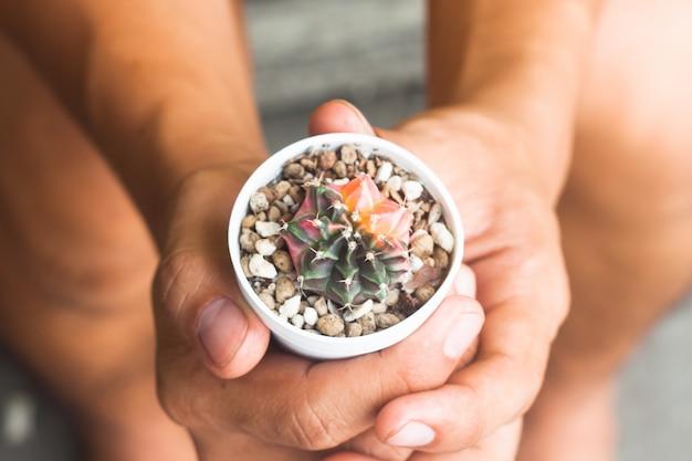 Cactus dans l'usine de pot sur les mains