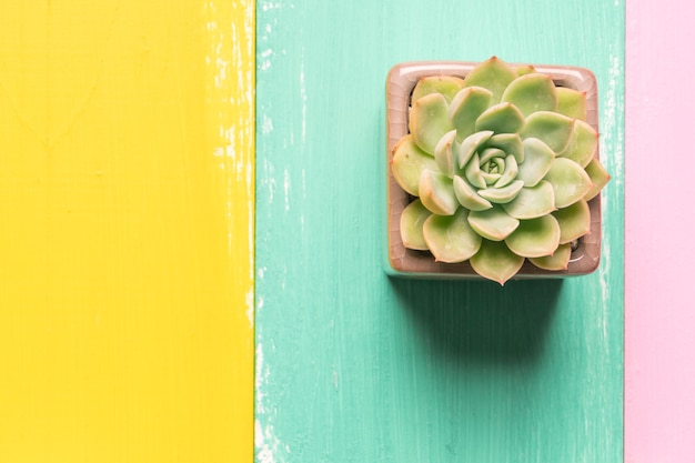 Cactus dans la vue de dessus de pot sur les arrière-plans en bois colorés avec espace de copie