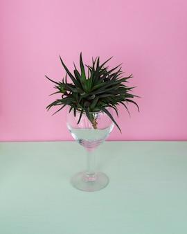 Cactus design de mode. mode minimaliste stillife. couleurs vives à la mode.