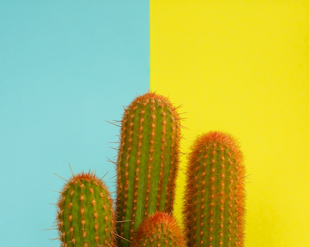 Cactus design de mode. mode minimaliste stillife. couleurs vives à la mode.