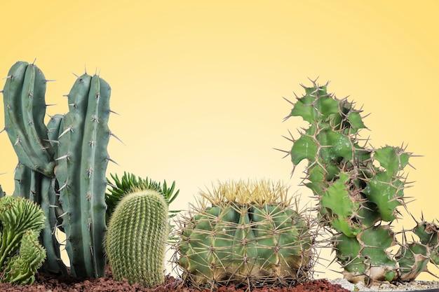 Cactus de divers types avec un fond jaune