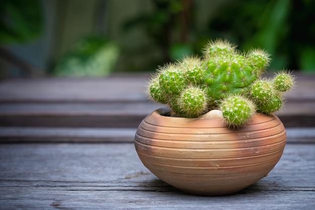 Cactus (echinopsis) dans des pots en argile sur un plancher en bois