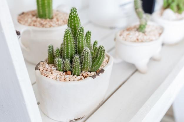 Cactus sur étagère blanche