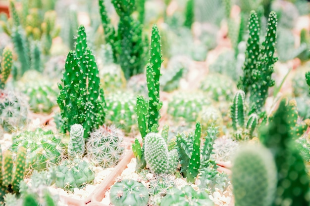 Cactus de ferme pour planter une variété d'espèces