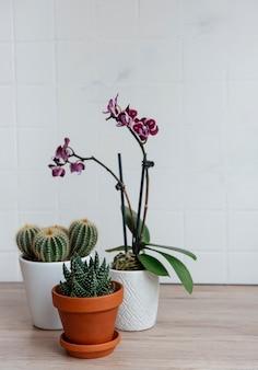 Cactus, fleurs d'orchidées et plantes succulentes en pots sur la table, plantes d'intérieur