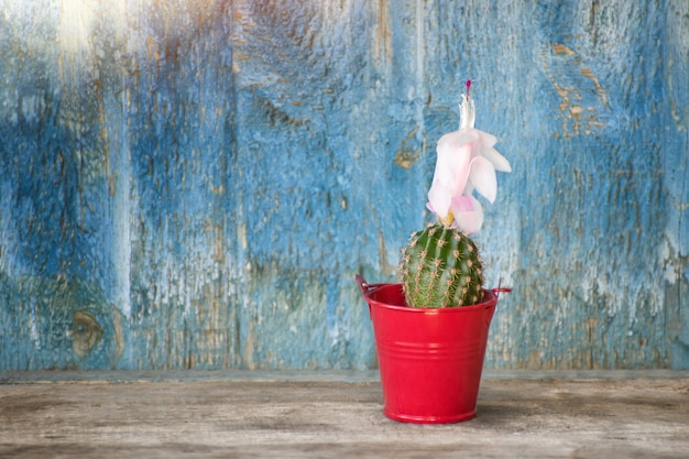 Cactus à fleurs en pot rouge. vieux fond en bois