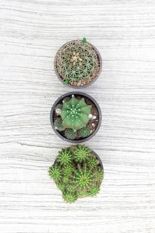 Cactus fond blanc