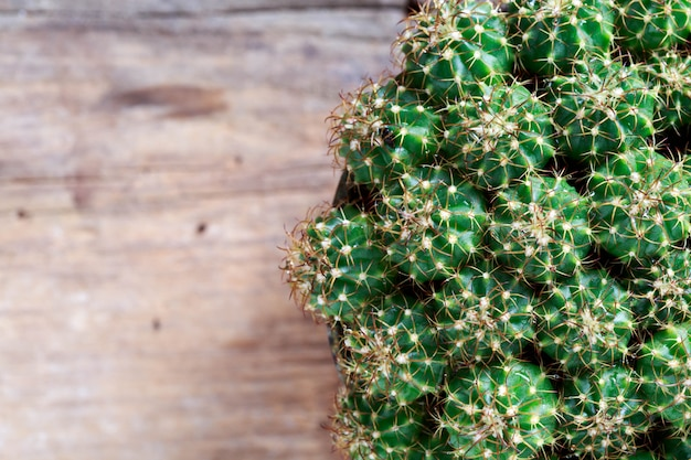 Cactus sur fond en bois