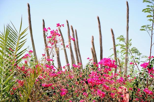 Cactus sur fond de ciel parmi les fleurs rouges.