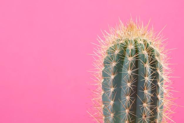 Cactus sur le fond clair avec espace de copie