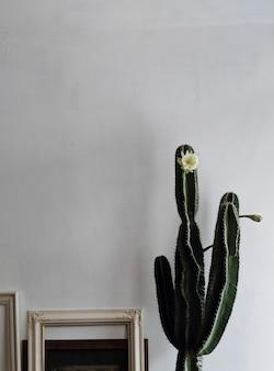 Cactus d'intérieur en fleurs