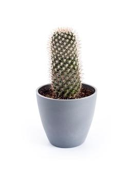 Cactus mammillaria dans un pot isolé sur fond blanc