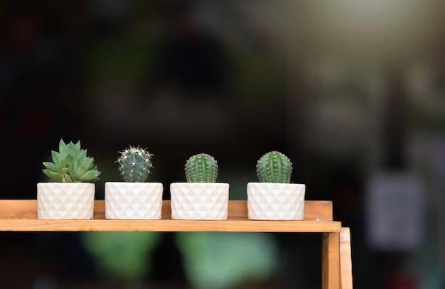 Cactus mis sur une table en bois avec un arrière-plan flou de nature verte fraîche