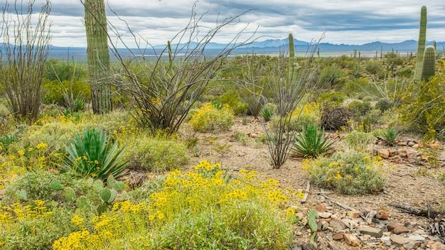 Cactus mixtes dans une scène de désert