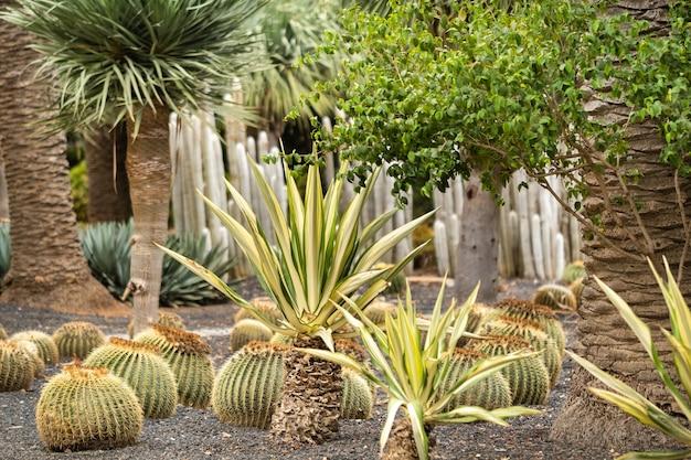 Cactus et palmiers sur l'île de tenerife.îles canaries, espagne