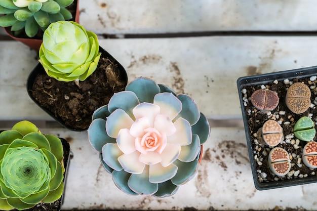 Cactus pastel dans la vue de dessus de pot sur les fonds de table en bois. concept de fleur de printemps