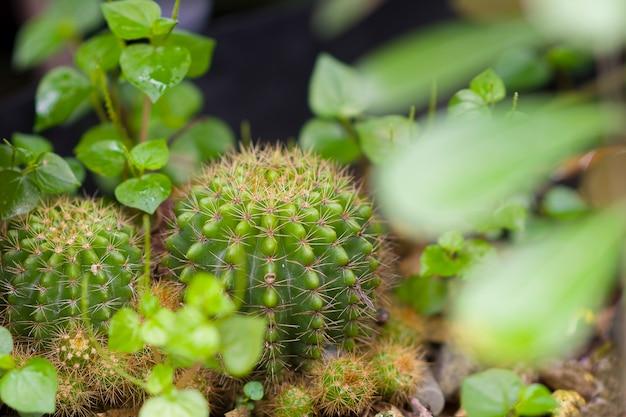 Cactus planté dans un pot.