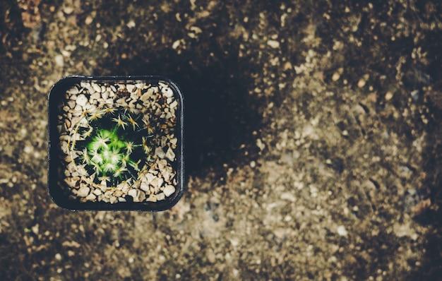 Cactus planté dans des pots pour décorer