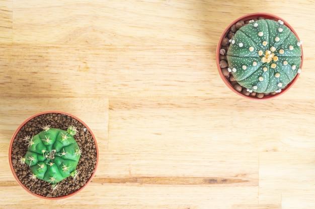 Cactus ou plantes succulentes dans le pot sur le fond de table de bureau en bois