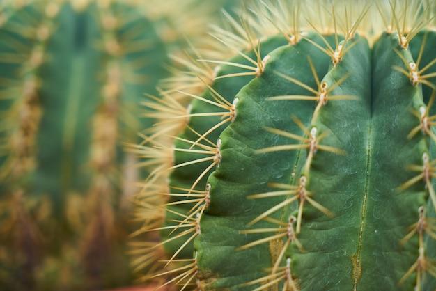 Cactus avec des pointes gros plan