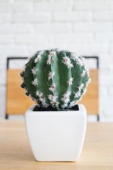 Cactus en pot blanc sur table