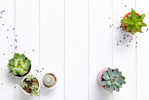 Cactus en pot et bordure succulente à plat avec un espace vide