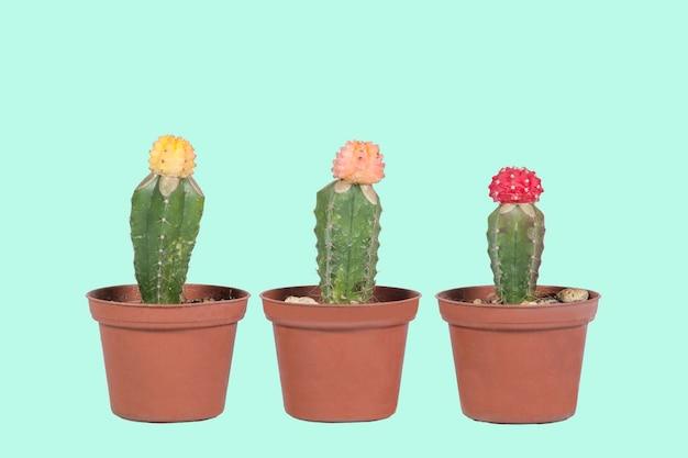Cactus en pot avec style pop avec fond bleu pastel