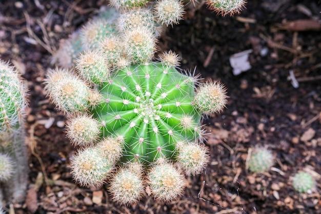 Cactus sur un pot de terre posé sur un terrarium pour décorer l'intérieur de la maison et du bureau