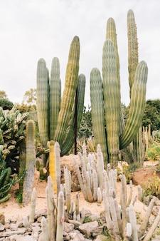 Cactus poussant sur le terrain