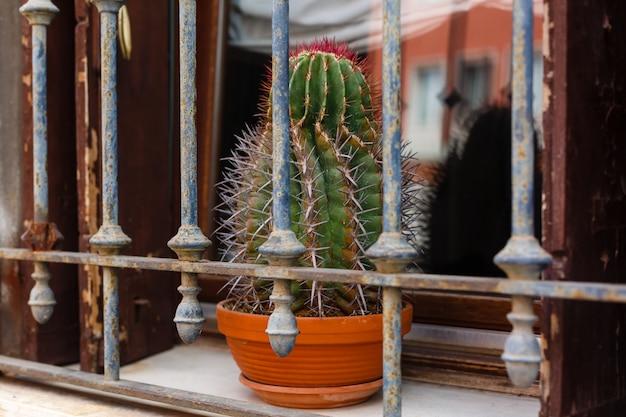 Cactus sur le rebord de la fenêtre derrière les barreaux