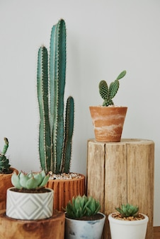 Cactus et succulentes mélangés dans de petits pots