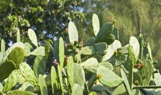 Cactus vert, arrière-plans