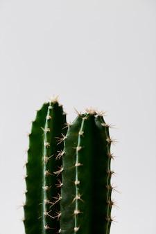 Cactus vert minimal en pot isolé sur fond blanc