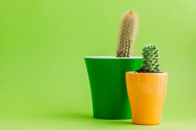 Cactus vert tropical sur fond vert.