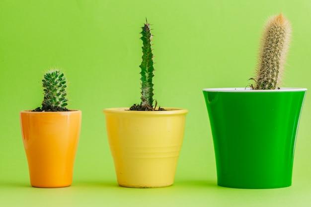 Cactus vert tropical sur le vert.