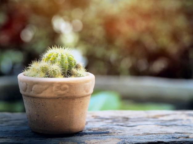 Cactus vintage avec la lumière du soleil et l'espace coppy