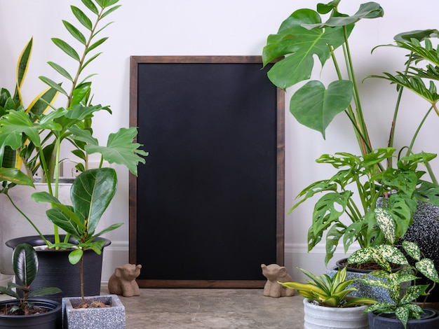 Cadre de l'affiche et diverses plantes d'intérieur sur le sol en ciment et la statue d'éléphant purifient l'air avec monsteraphilodendron selloum cactus palmier aïdezamioculcas zamifoliaficus lyrata