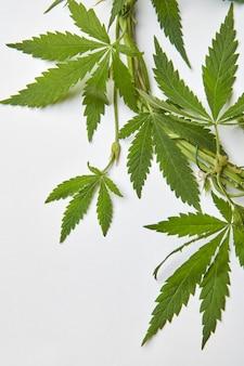 Cadre d'angle avec des feuilles de cannabis vertes liées avec du fil.