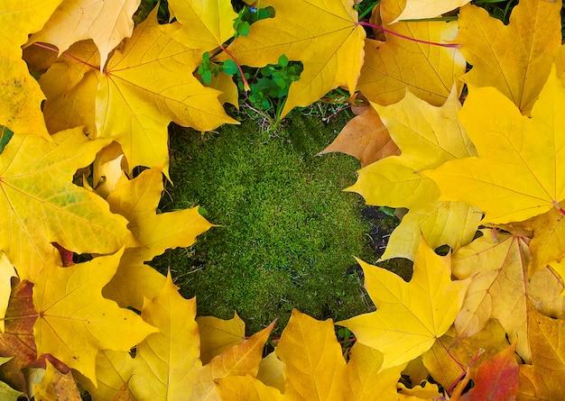 Cadre d'automne en automne coloré laisse sur fond de mousse verte